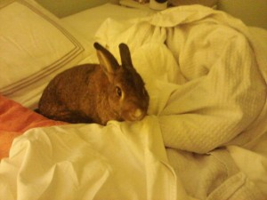lexi on bed