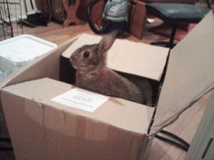 Joey in Box