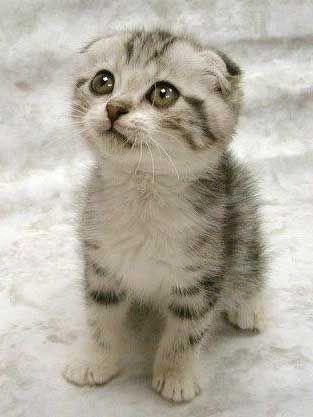 cute-kittenweee
