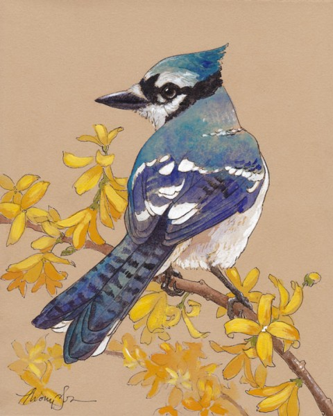 Blue-Jay-web-final
