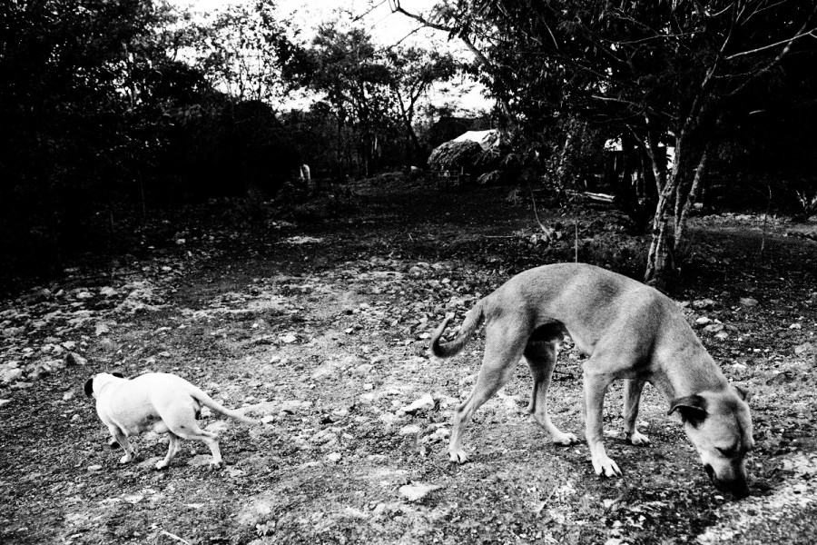 dogs01