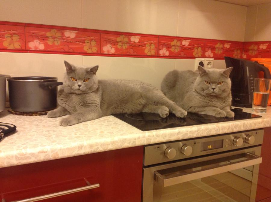 Любимое место на кухне