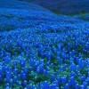 blue_valey