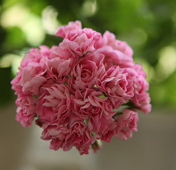 пинк розебуд