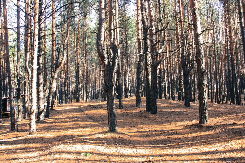 лес кирс (3 of 3)
