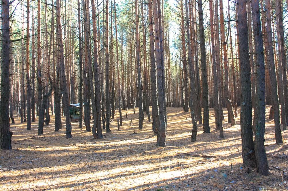 лес кирс (1 of 3)