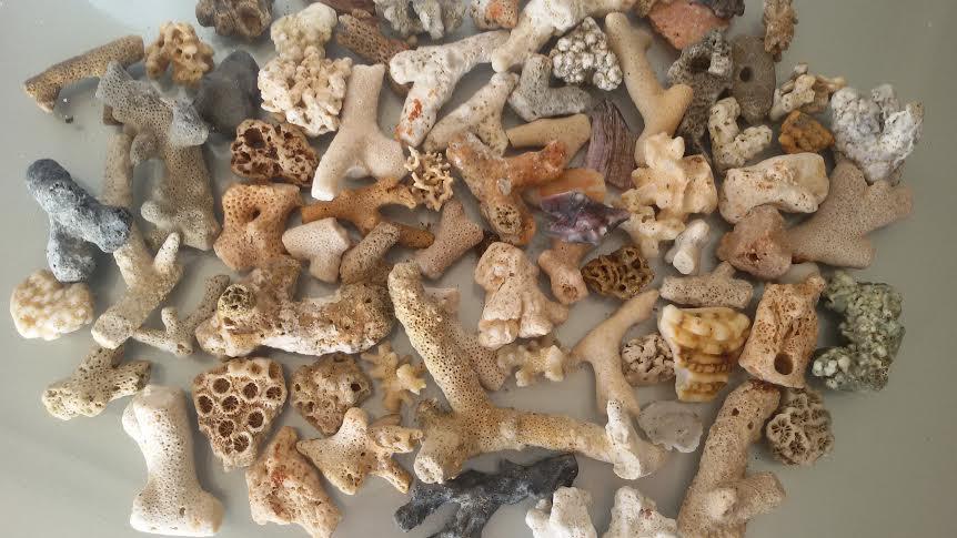 corail de Maurice