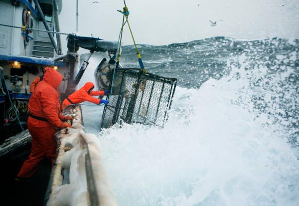 как ловит рыбу на краб
