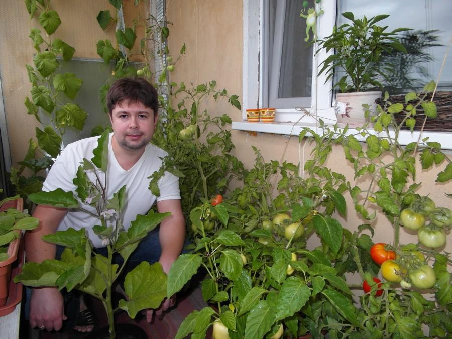 Болгарский перец на балконе выращивание.