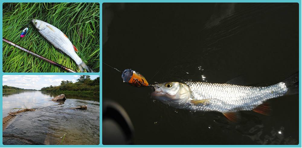 на рыбалку за голавлем