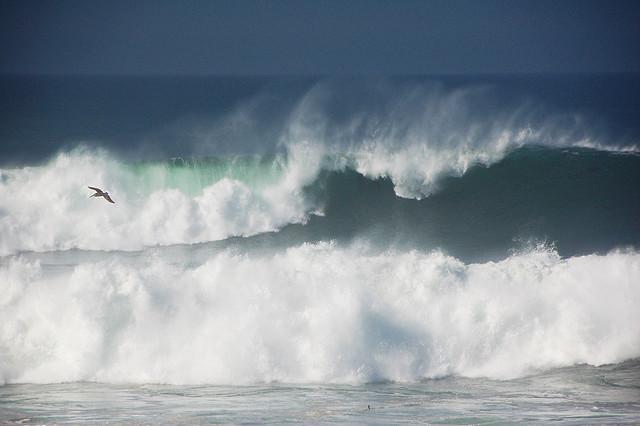 mare-tempesta-gabbiano