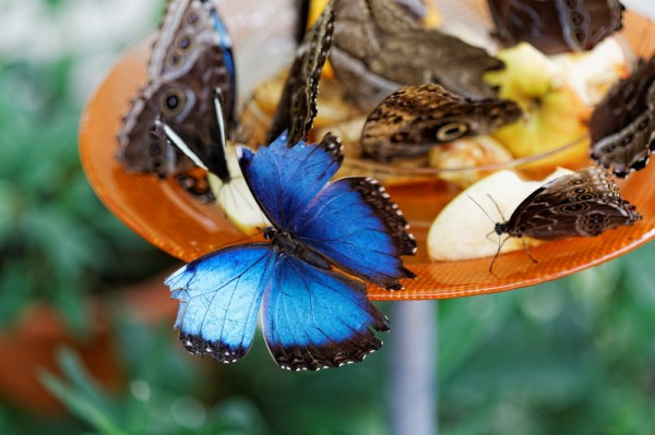 Дом бабочка фото