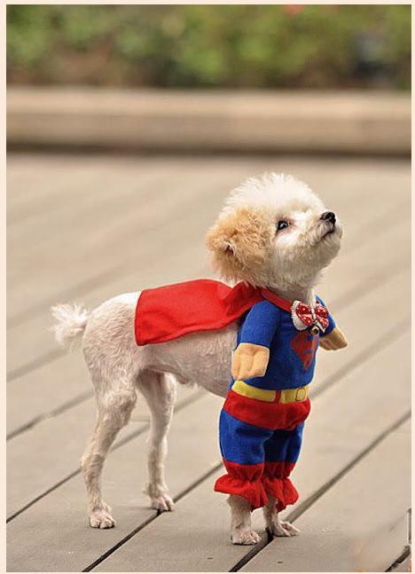 supersobaka