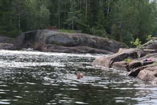 Плавают