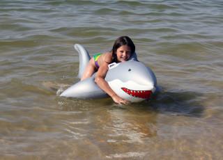 Любимая акула
