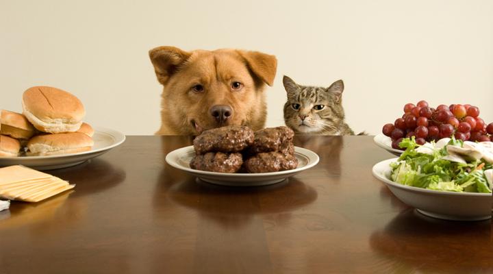 Картинки по запросу кормить собак кашами