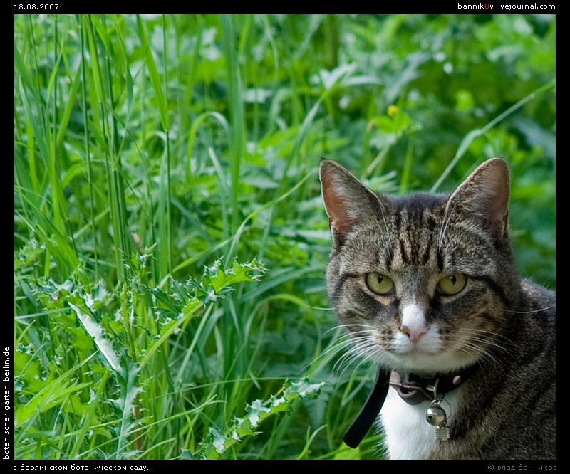 кот-охранник