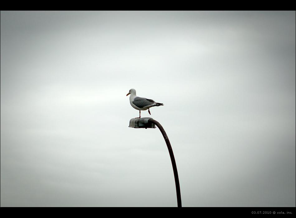 чайка на фонаре стоит на одной ноге
