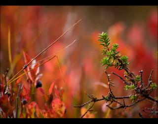 12.09.2010 | красное и зелёное