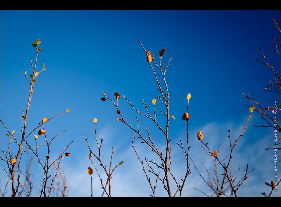 листва и небо