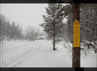 указатель на лыжне
