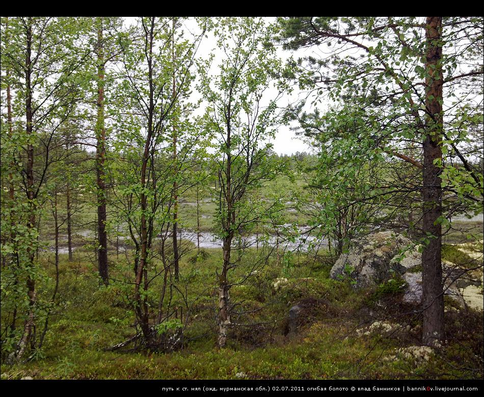 огибая болото на пути от ст. пяйве к ст. нял.