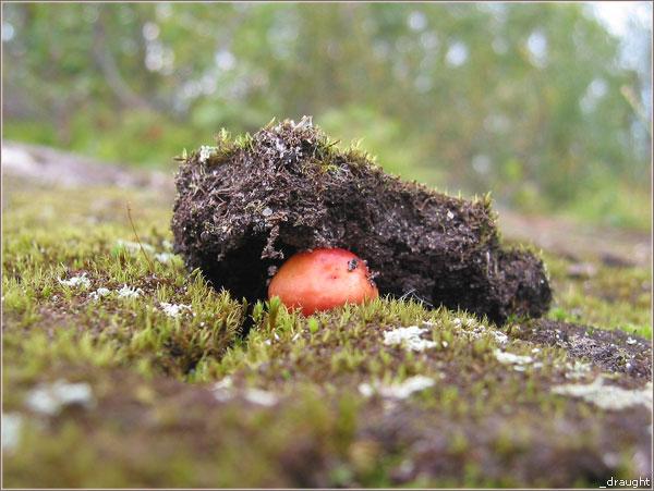 hallu_118_mushroom