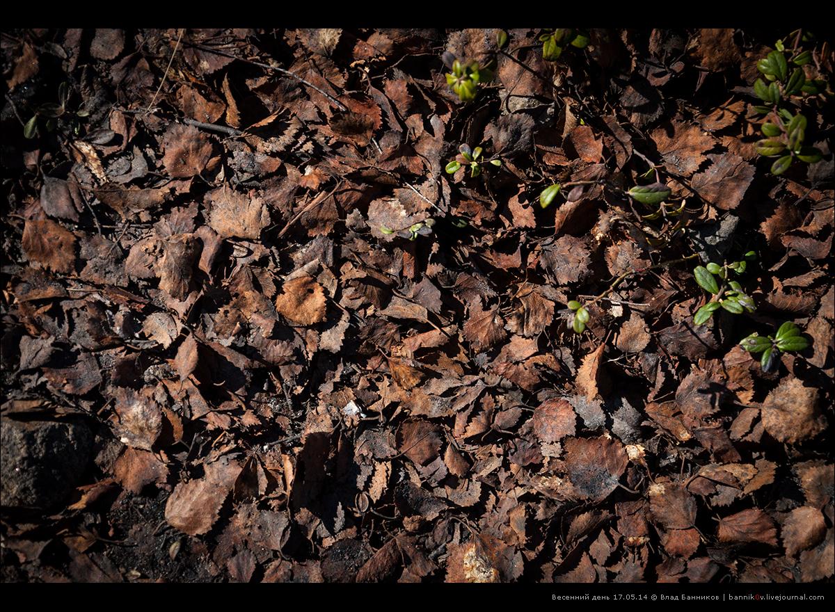 Весенний день 17.05.14 | прошлогодняя листва