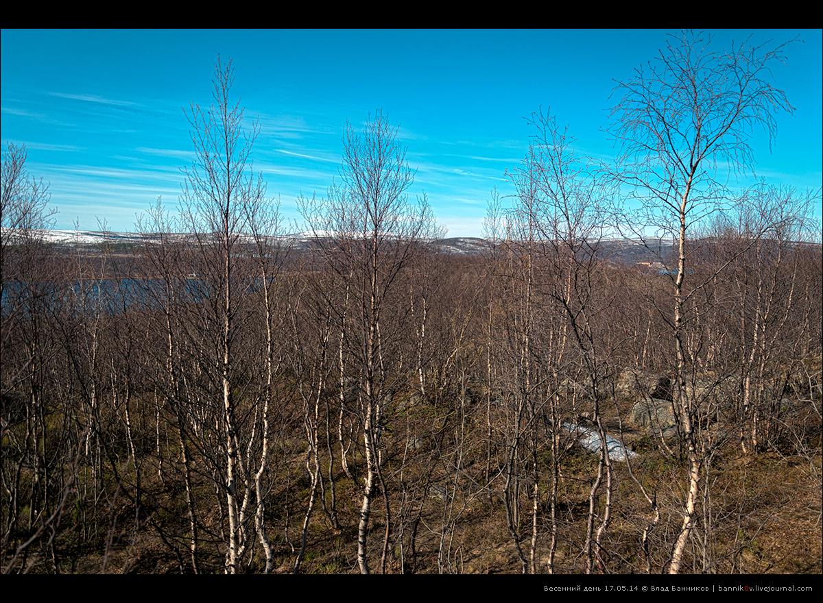 Весенний день 17.05.14 | среди голых деревьев