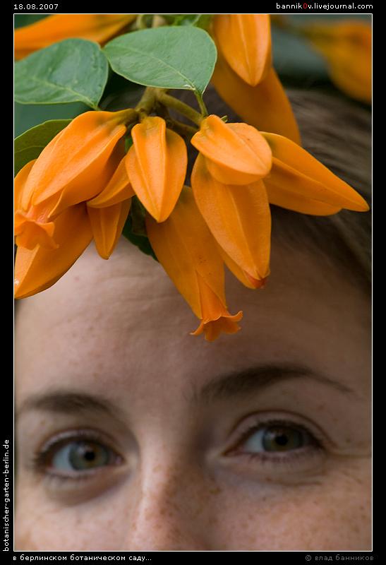 маша прячется в цветах