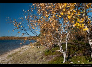 Листья падают