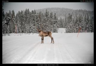 Финляндия: между Raja Jooseppi и Ivalo