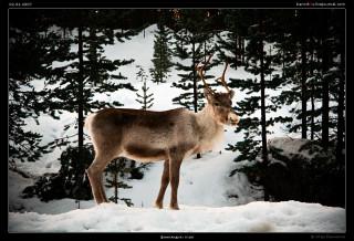 финляндия: inari