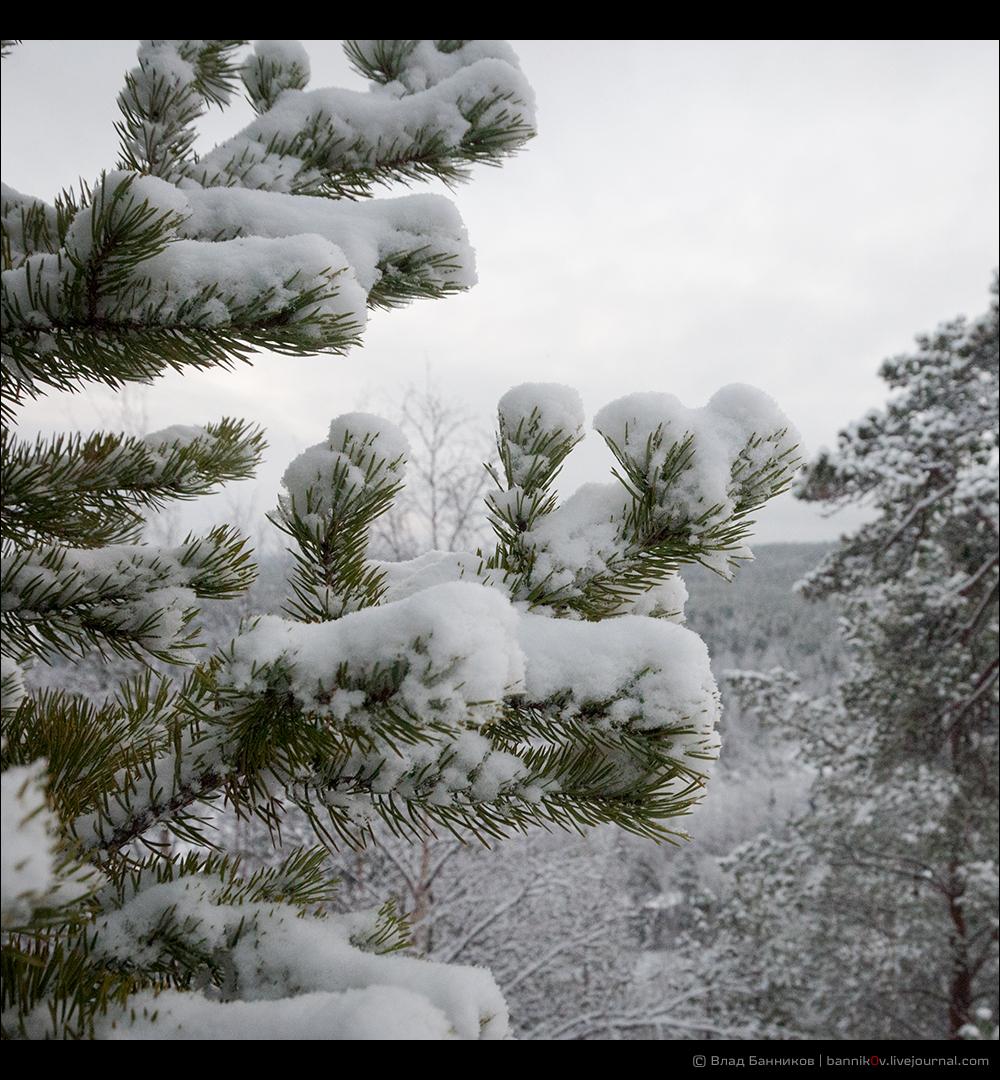 Снег на ветвях