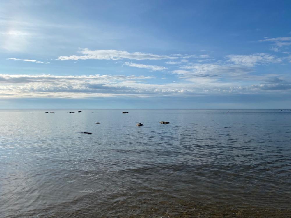 Финский залив в начале первого месяца лета. Хорошие места. Южный берег.