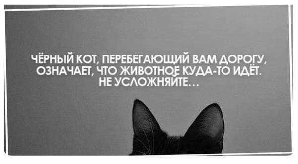 кот черный_модератор