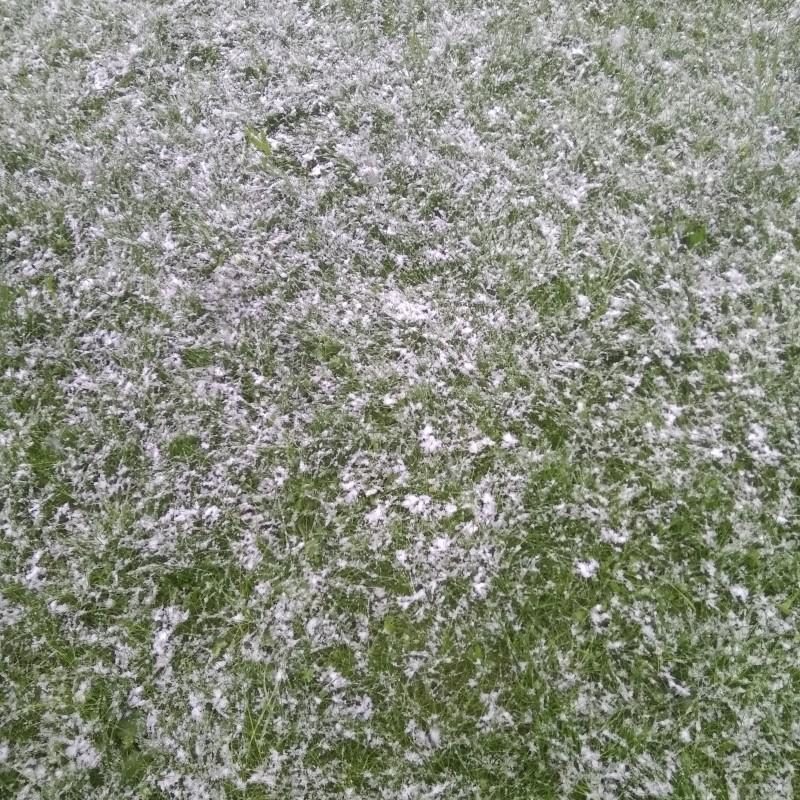 Снег на траве.jpg