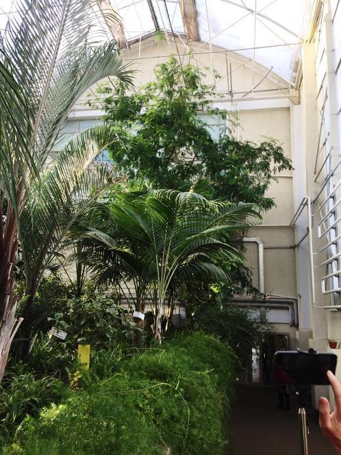 Огромные тропические деревья при входе в оранжерею.