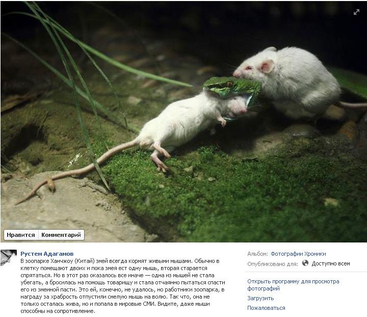 Мыши-змея
