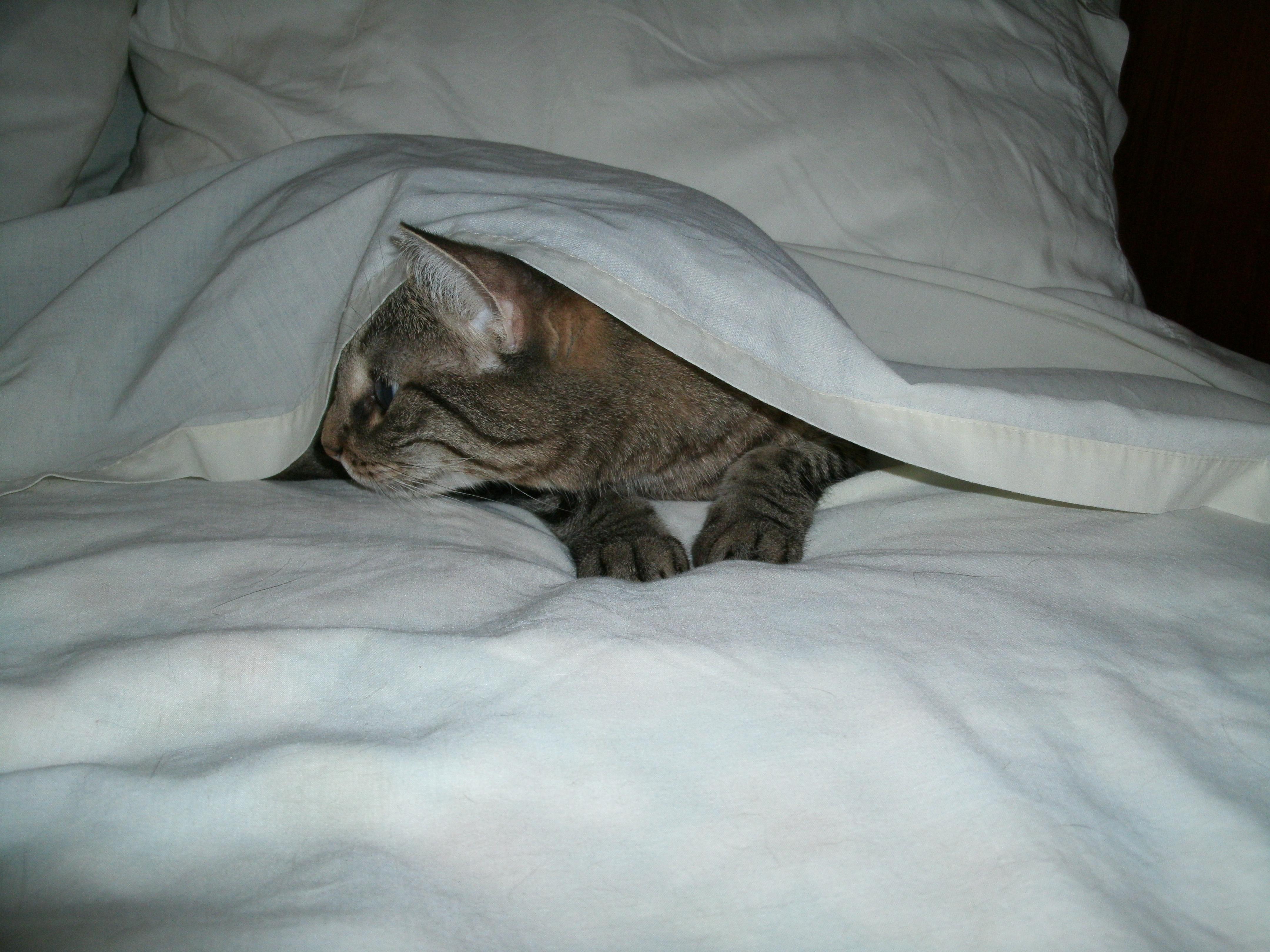 kitties 006
