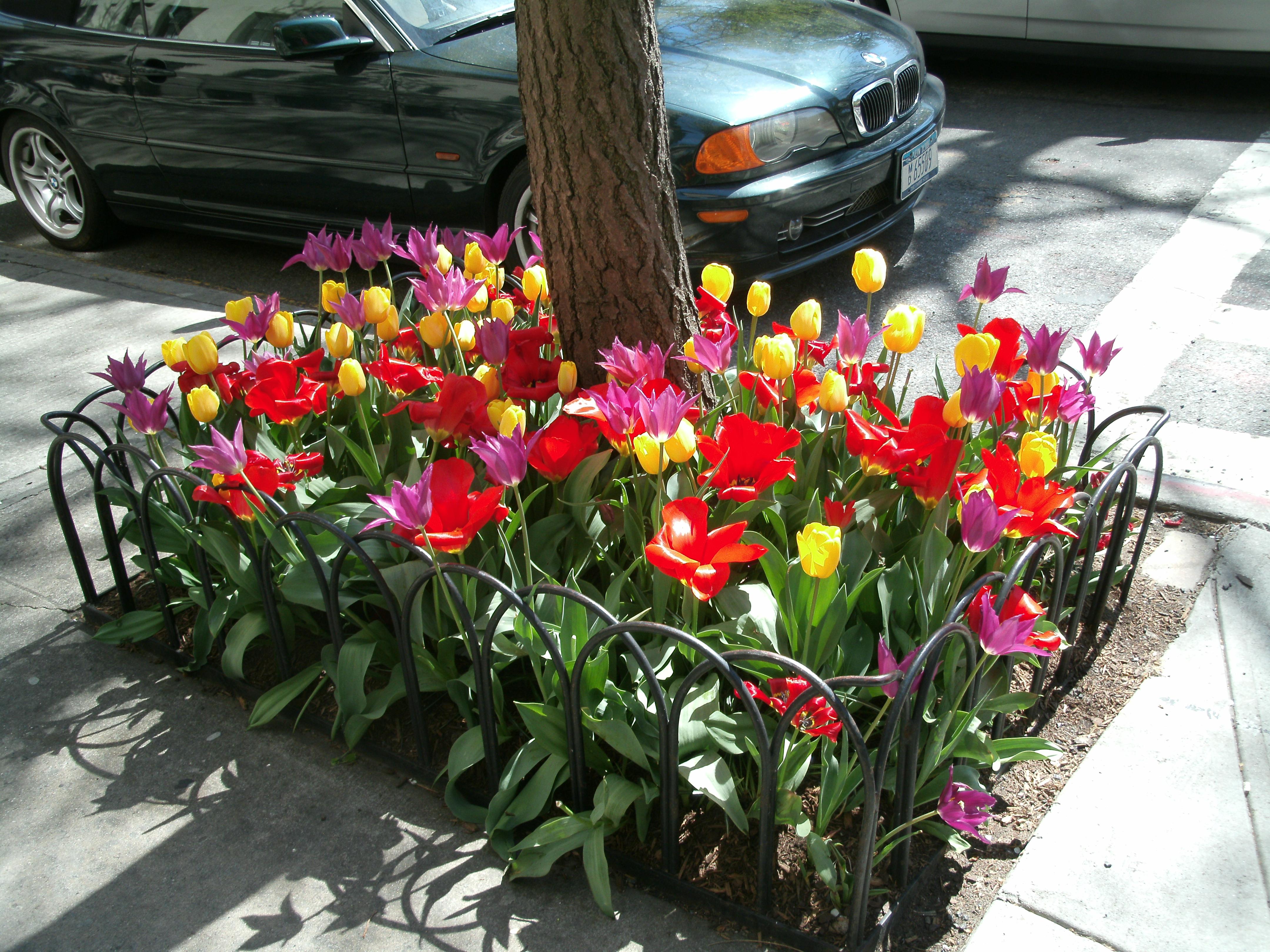 spring 13 008