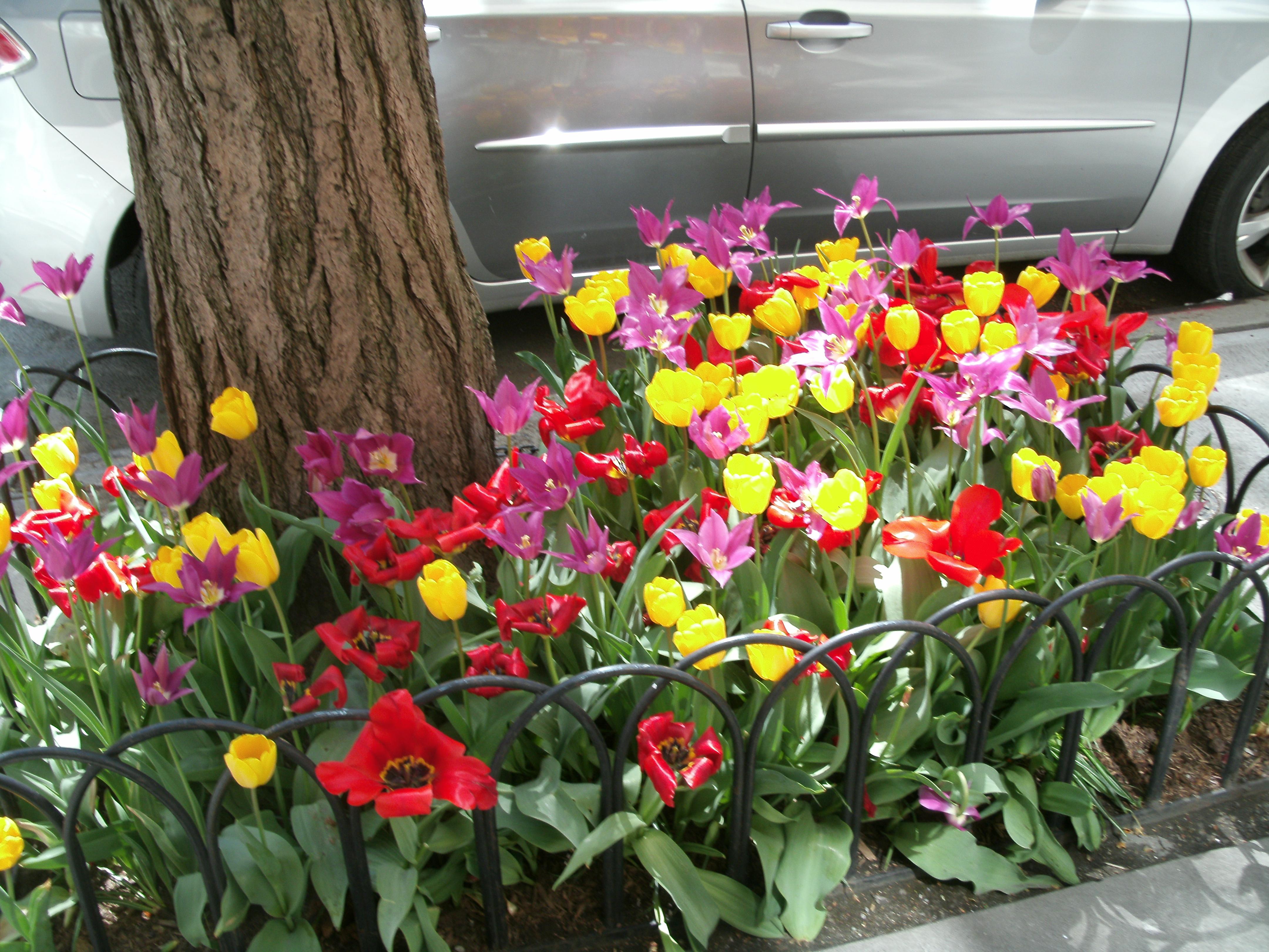 spring 13 010