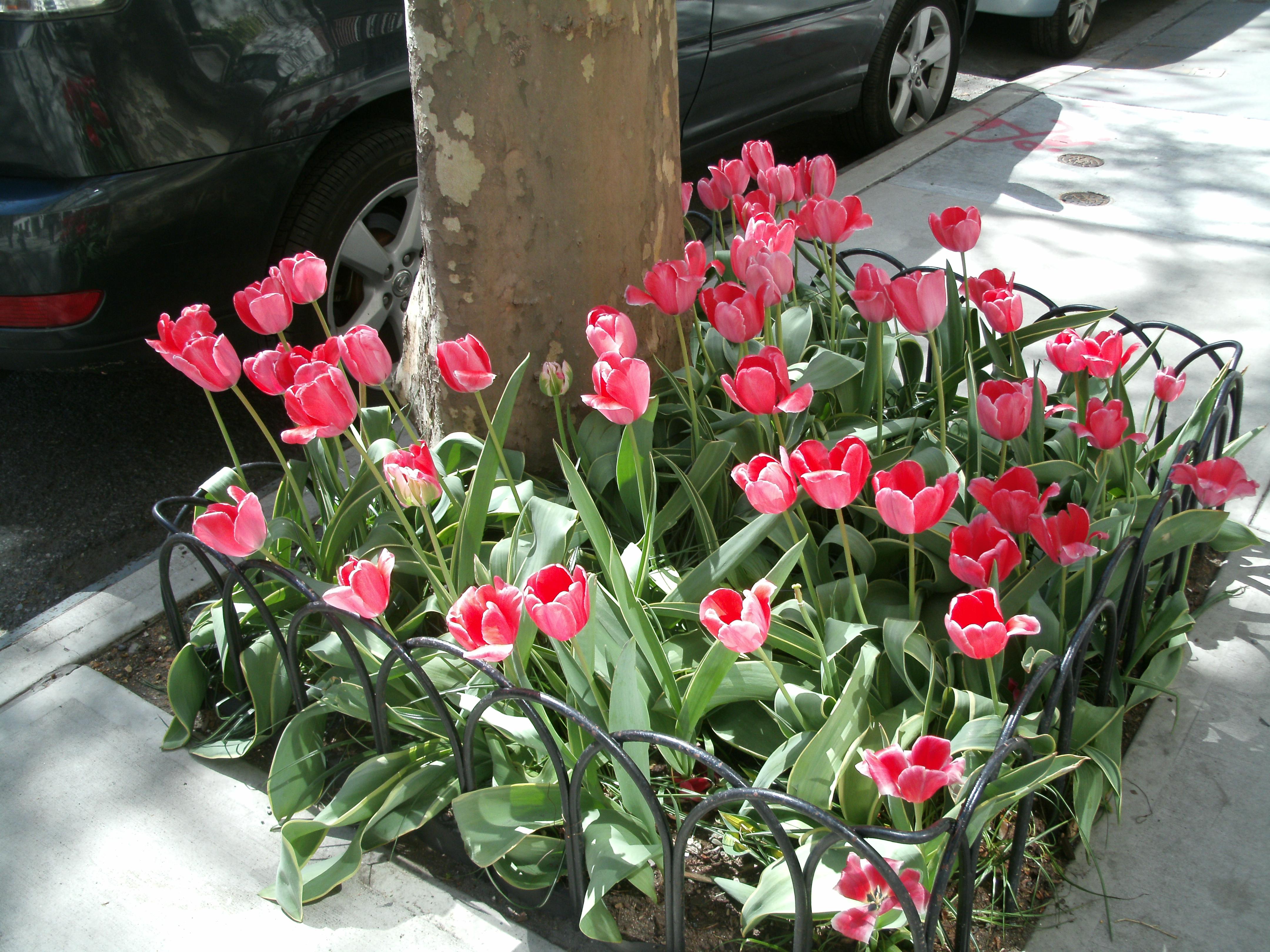 spring 13 011