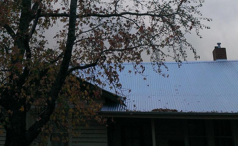 autumn trees 2