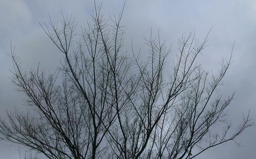 autumn trees 5