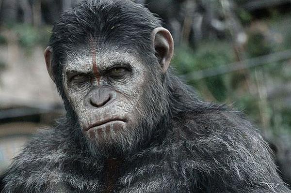 20141004-apes-post