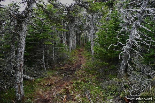 woods_00022