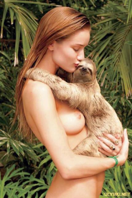 ленивец, сиськи
