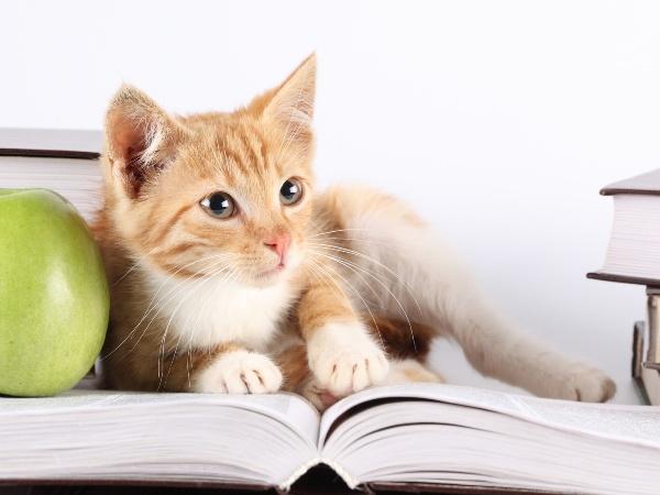 кот и книга