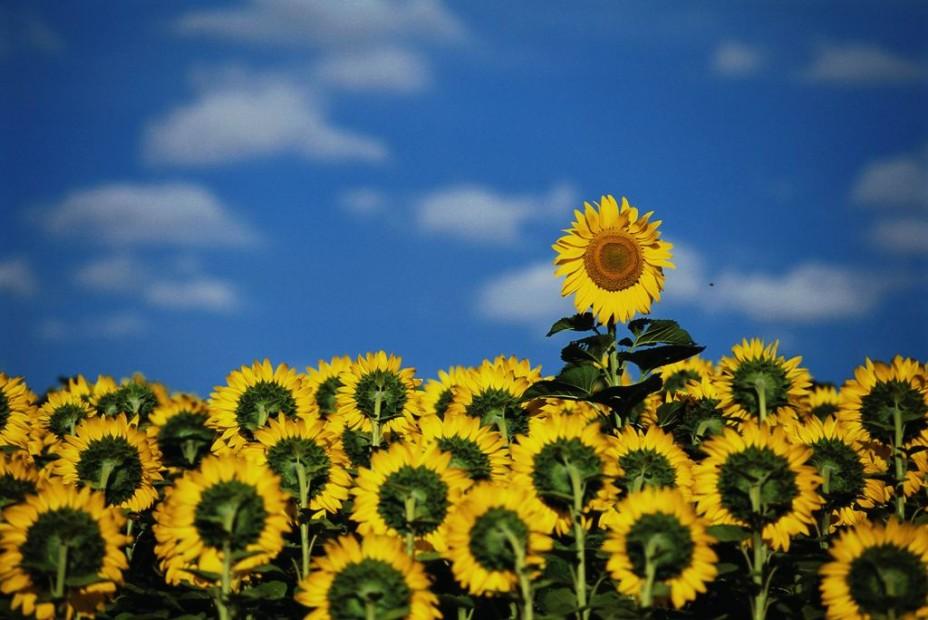 Запрет на ввоз цветов из Голландии